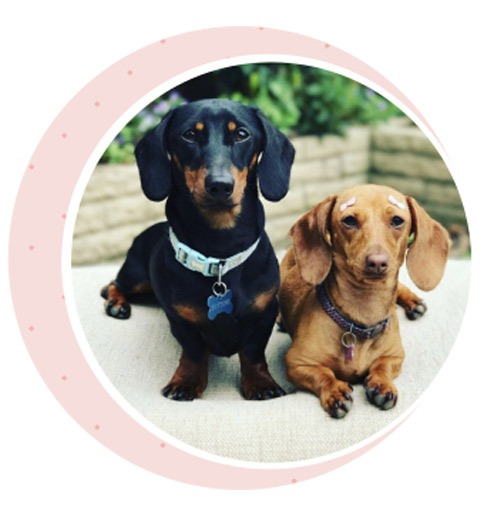 Two sausage dogs